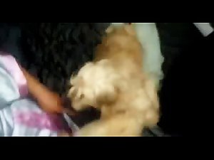 woman and dog sucking man dick