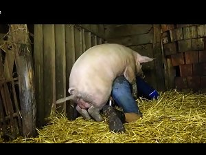 Man fucked by a big pig